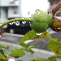 大雨の後の庭