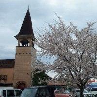 桜の昇り龍 光城山とその他桜あれこれ ~安曇野市~