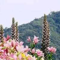 Gifu / Mt.Kinka ( 金華山)