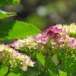 我が家の花 My garden