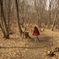 太白山自然観察の森