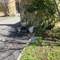 春を  感じてランチは、グリーンカレーのセットとぶりの照り焼きに変化していきます。