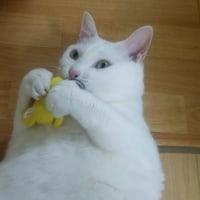 恵太郎の新しいおもちゃ
