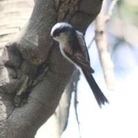 鴻巣山の鳥たち