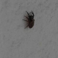 クモとトンボ