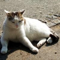 ペットモデルの猫を撮影