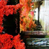紅葉🍁岩国