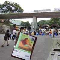 多摩動物公園-オオコノハムシ