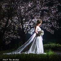 大洲・夜桜・ウェディングドレス✨