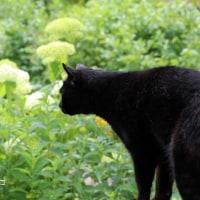 黒猫の庭~ブルーベリー2017