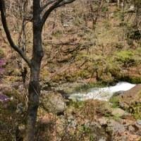 ミツバツツジと鐘山の滝~忍野村