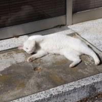 八王子・町田「峠」探訪その3/青木家屋敷ほか