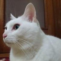 3月17日(金)のつぶやき ねェ~ねェ~顔の左右のとこ汚れてニャい? #白猫 #cat 白猫ミルコ @mirko_cat