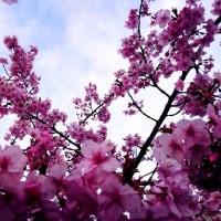 もうすぐ春ですねぇ~