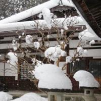 Gifu / Takayama Trip ( 4 ) ( 高山旅行)