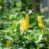 梅雨の晴れ間の植物園3
