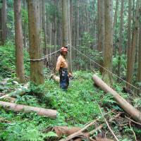 間伐材と言うランクの木は無い