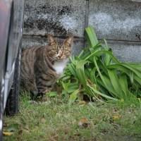 猫探訪・・逃げるかと思いきや