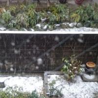 11月に54年ぶりの初雪!