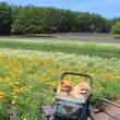 らんまるの大冒険2017夏 東北 北海道の旅 その10 ファーム富田