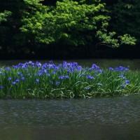 6月の平池