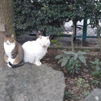 ウォーキングの途中で出会うネコ達!