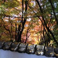 普現寺の紅葉(臼杵市野津町)