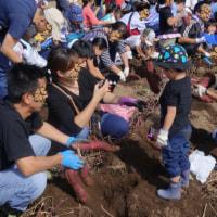 自治会の「さつま芋の収穫」