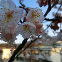 花の季節が訪れました