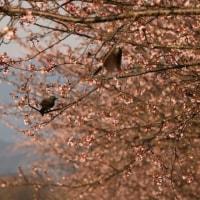 花とヒヨドリ<花だより>