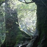 森の音を聴く  屋久島 5月27日(土)