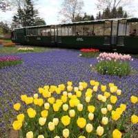 春の札幌ひとり旅3日間・百合が原公園に咲く花たちを撮る!!