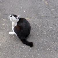 風格猫…多摩川猫シリーズ