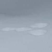 足留池 ウサギの足跡