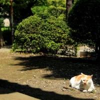 東京下町ねこ散歩Ⅰ 2016年4月 その3