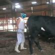 朝の牛舎  その2