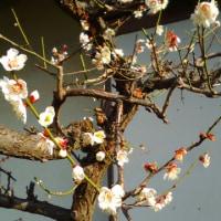 2月25日の花