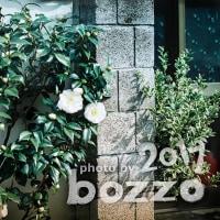 【bozzo.jp】道端で見かけた白椿