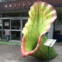 デッカイ食虫植物