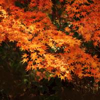 昭和記念公園の秋を撮る