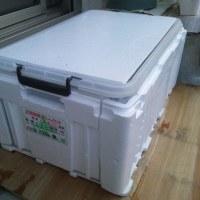 ザリガニの屋外飼育ケース大研究 冬編