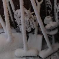 樹氷と思いきや、、