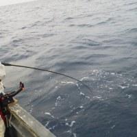 ハタ釣りに