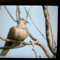 台湾野鳥撮影旅の4日目