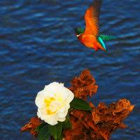 『今日の誕生花』 椿(白)