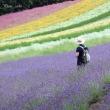 元祖ラベンダー畑の彩り