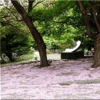 北大植物園の花