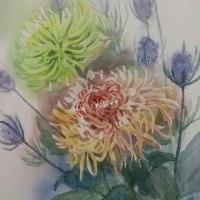 華やかな菊
