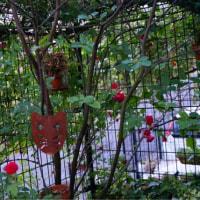 5月の庭5.22