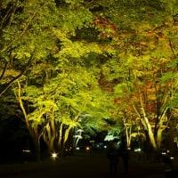 """秋の夜に浮かぶ、""""紅葉""""...はこだてMOMI-G(もみじ)フェスタ"""
